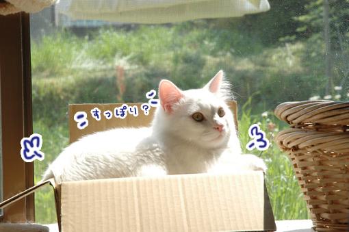 02_20090501000850.jpg