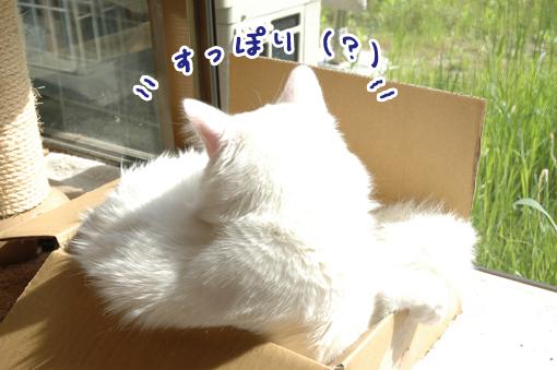 02_20090512235020.jpg