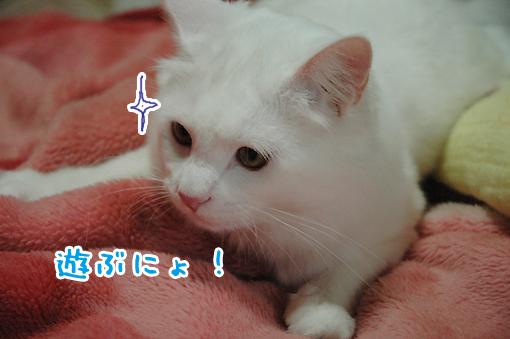 02_20090517012323.jpg