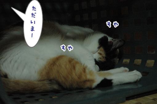 02_20090519214514.jpg