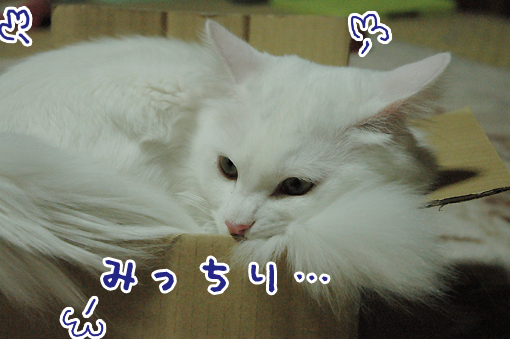02_20090614225227.jpg