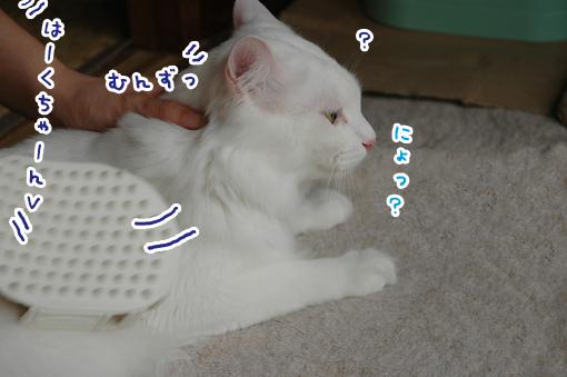 02_20090619211301.jpg