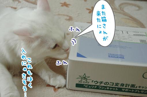 02_20090621213612.jpg
