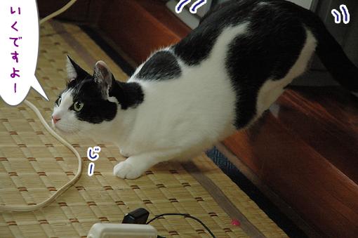 02_20090709010937.jpg