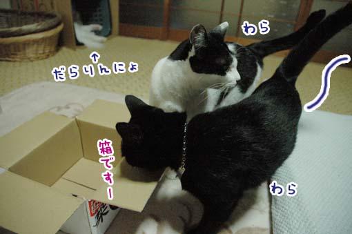 02_20090718001227.jpg