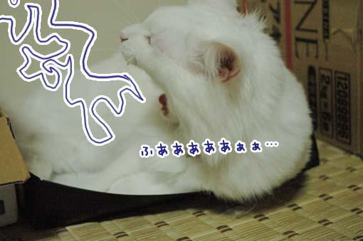 02_20090719233412.jpg