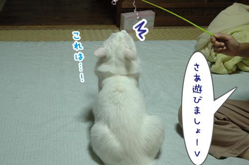 02_20090731000320.jpg