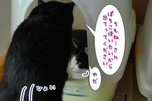 02_20090808012520.jpg