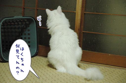 02_20090821015241.jpg