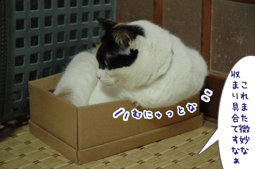 02_20090825012535.jpg