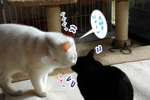 03_20090125012434.jpg