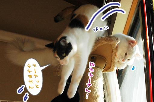 03_20090129164437.jpg