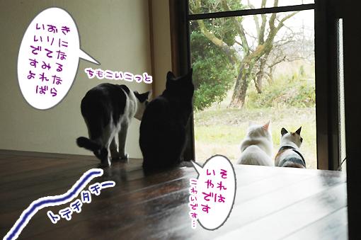 03_20090203213936.jpg