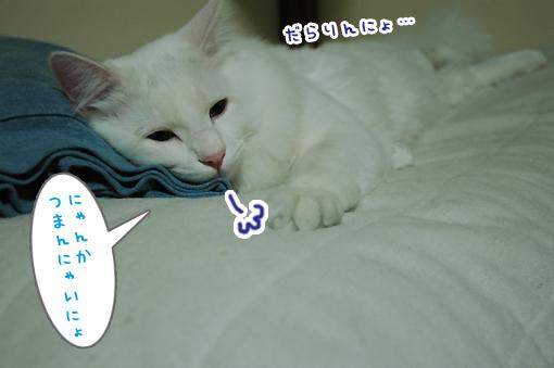 03_20090213002736.jpg