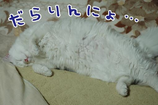 03_20090213212118.jpg