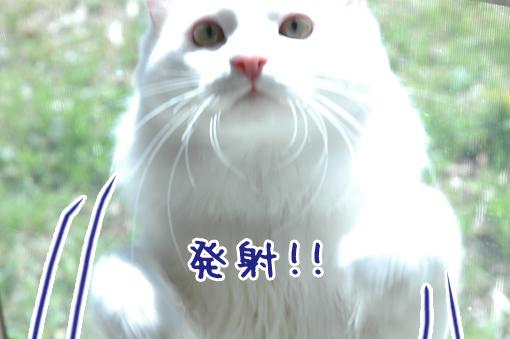 03_20090324003500.jpg
