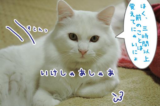 03_20090507232252.jpg
