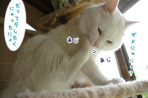 03_20090603212121.jpg