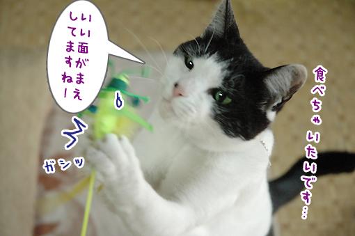 03_20090615233140.jpg