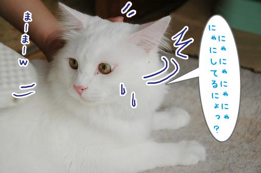 03_20090619211300.jpg