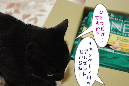 03_20090621213612.jpg