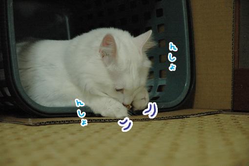 03_20090727232725.jpg