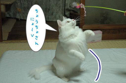 03_20090731000320.jpg