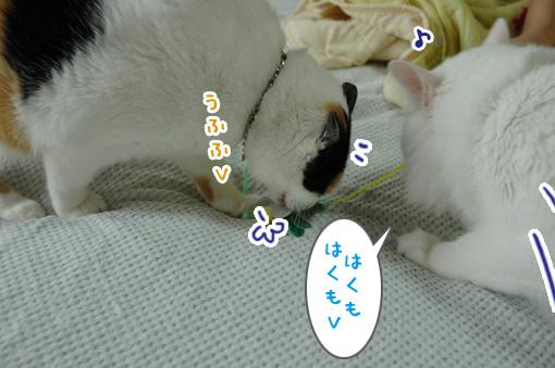 03_20090811194447.jpg