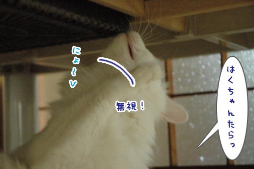03_20090817230758.jpg