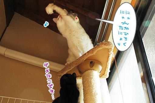 04_20090129164419.jpg