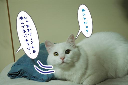 04_20090213002751.jpg