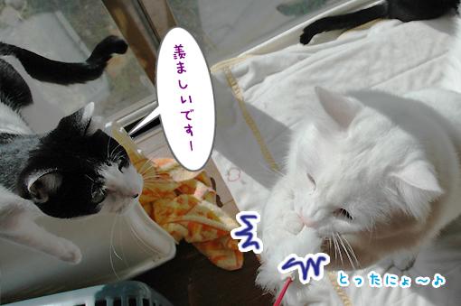 04_20090220001156.jpg