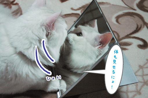 04_20090314013027.jpg