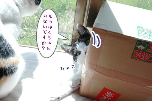 04_20090330231621.jpg