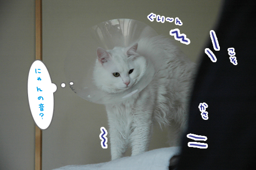 04_20090421012753.jpg