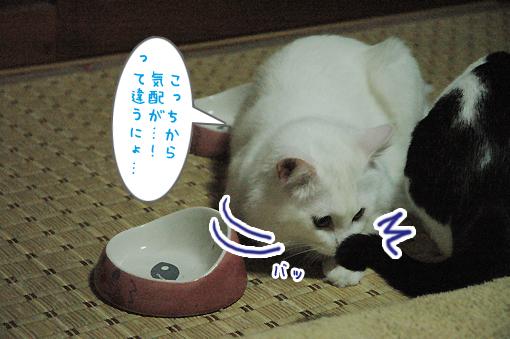 04_20090424002110.jpg