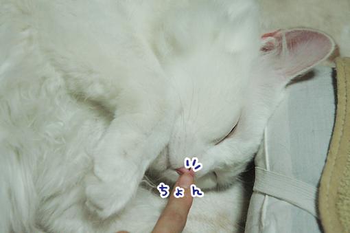 04_20090509231953.jpg
