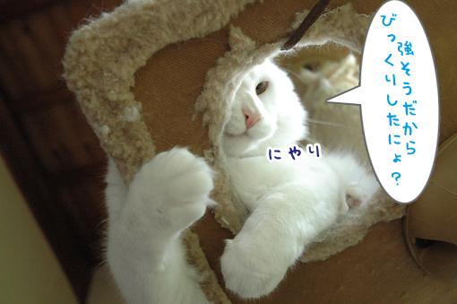04_20090522001952.jpg