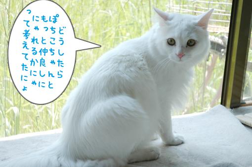 04_20090527014309.jpg