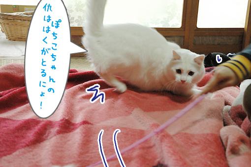 04_20090529160013.jpg