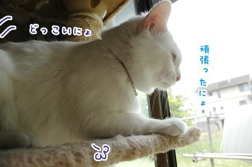 04_20090603212121.jpg