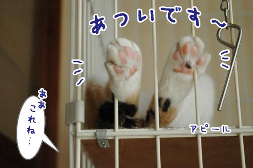 04_20090617234501.jpg