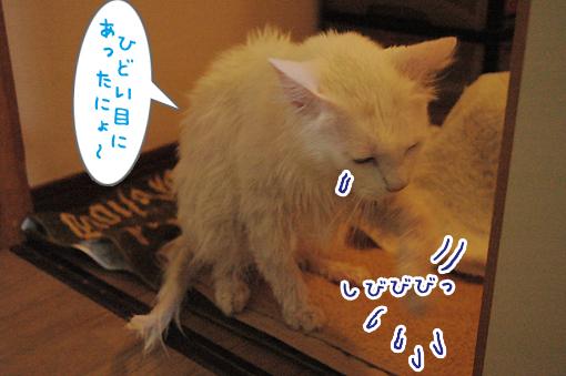 04_20090619211300.jpg