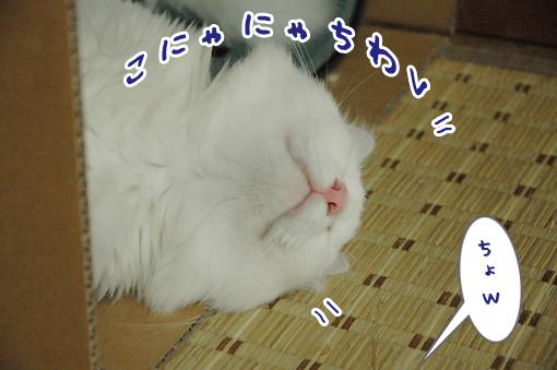 04_20090621002147.jpg
