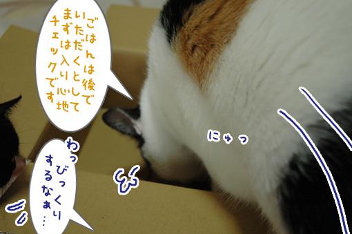 04_20090621213612.jpg