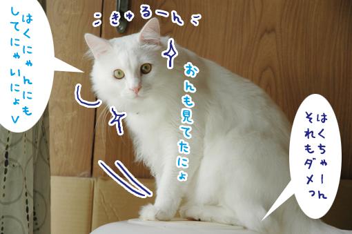 04_20090629235756.jpg