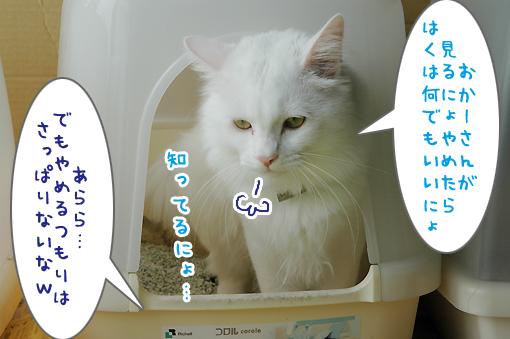 04_20090703231757.jpg