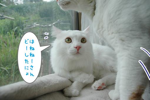 04_20090706232607.jpg