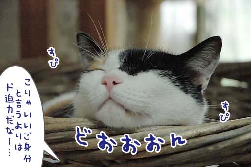 04_20090710170903.jpg