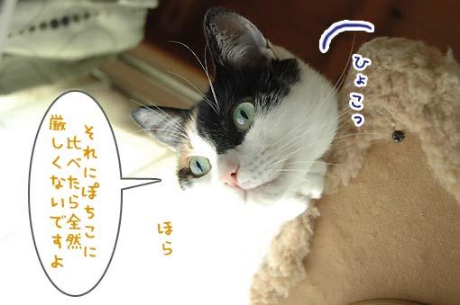 04_20090715003546.jpg